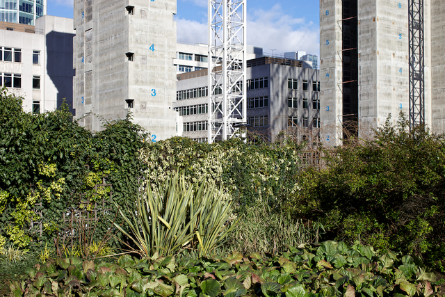 Image for St. Alphage - An abandones Stretch of Land in the City of london